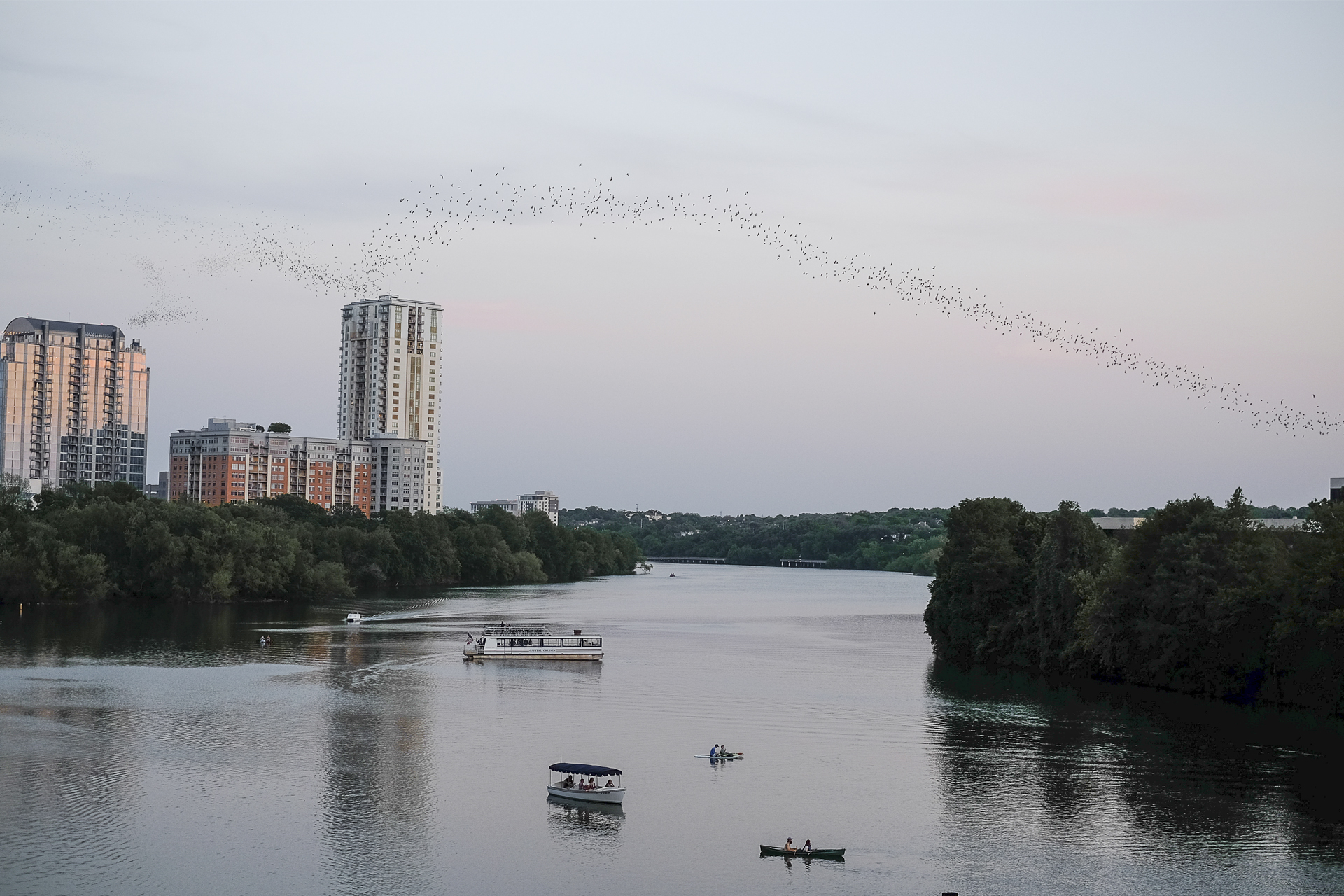 View of the Colorado River from Congress Bridge and the bats flying in an almost horizontal line