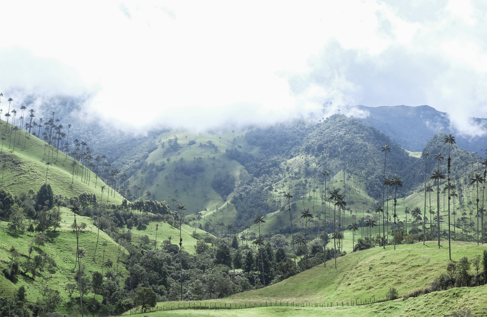 Cocora Vallee Salento Colombia palm tree cloud green