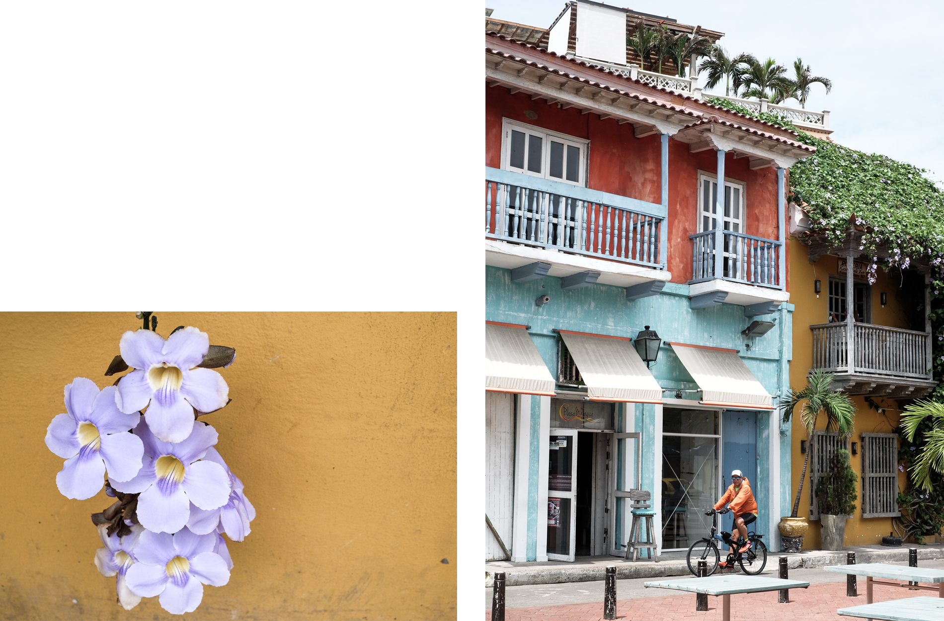 street cartagena flower building yellow