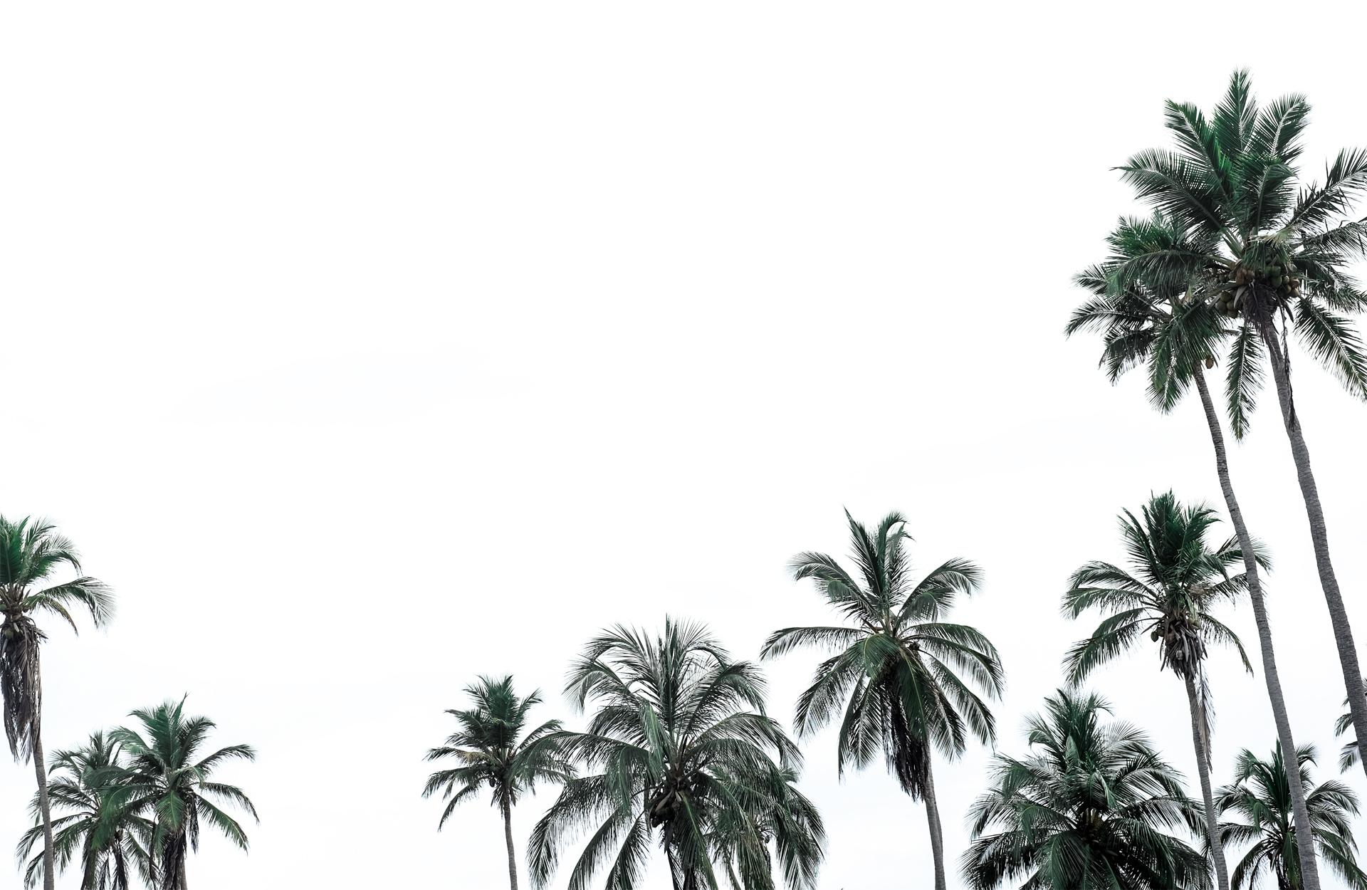 palm trees sky