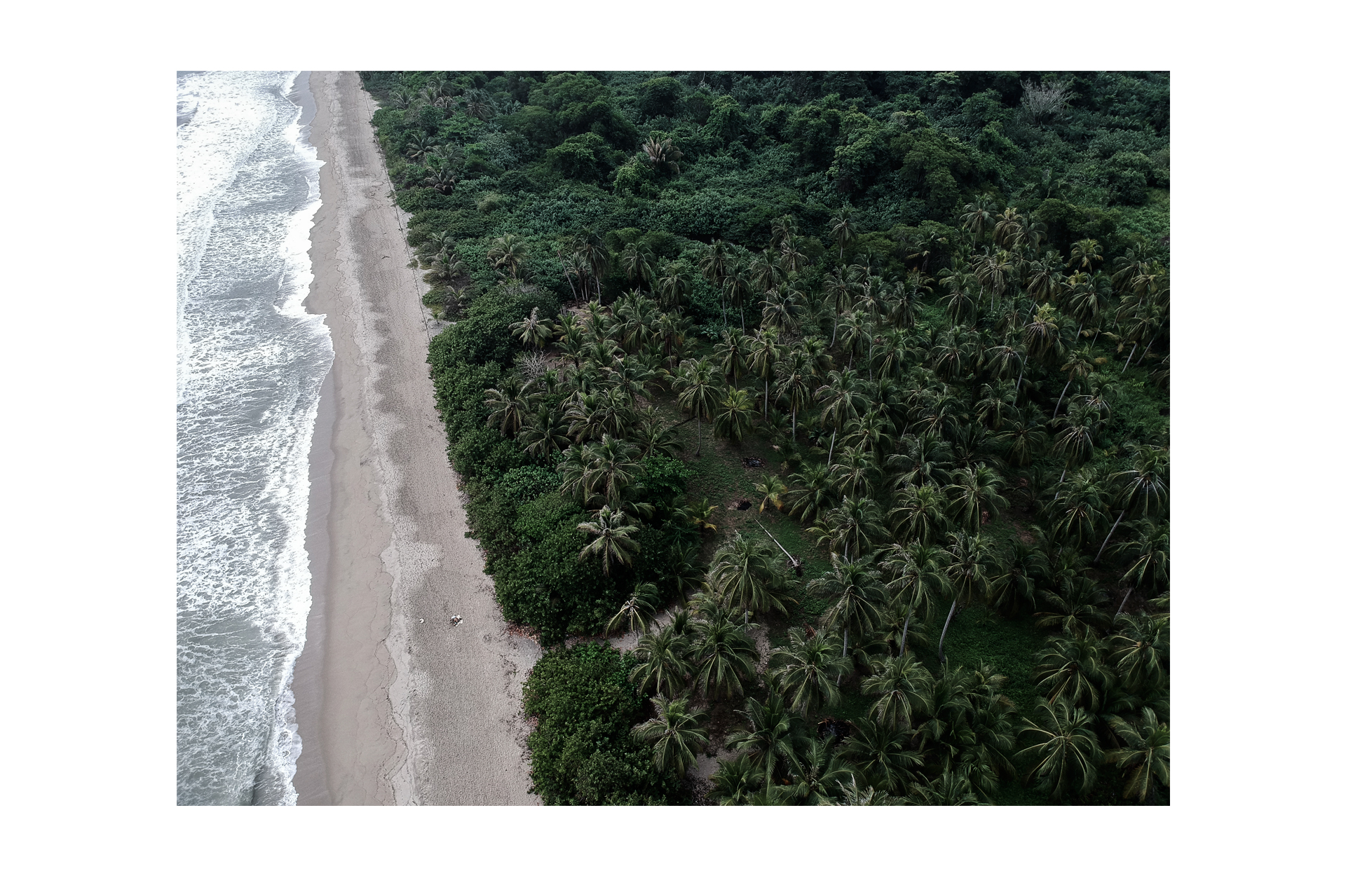 drone view palmtrees sand