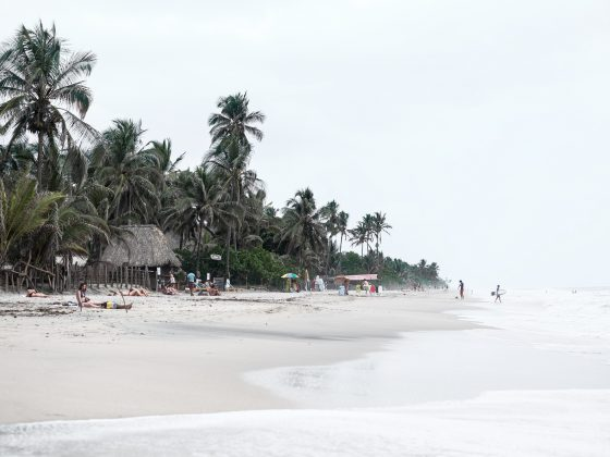 beach colombia white palm tree