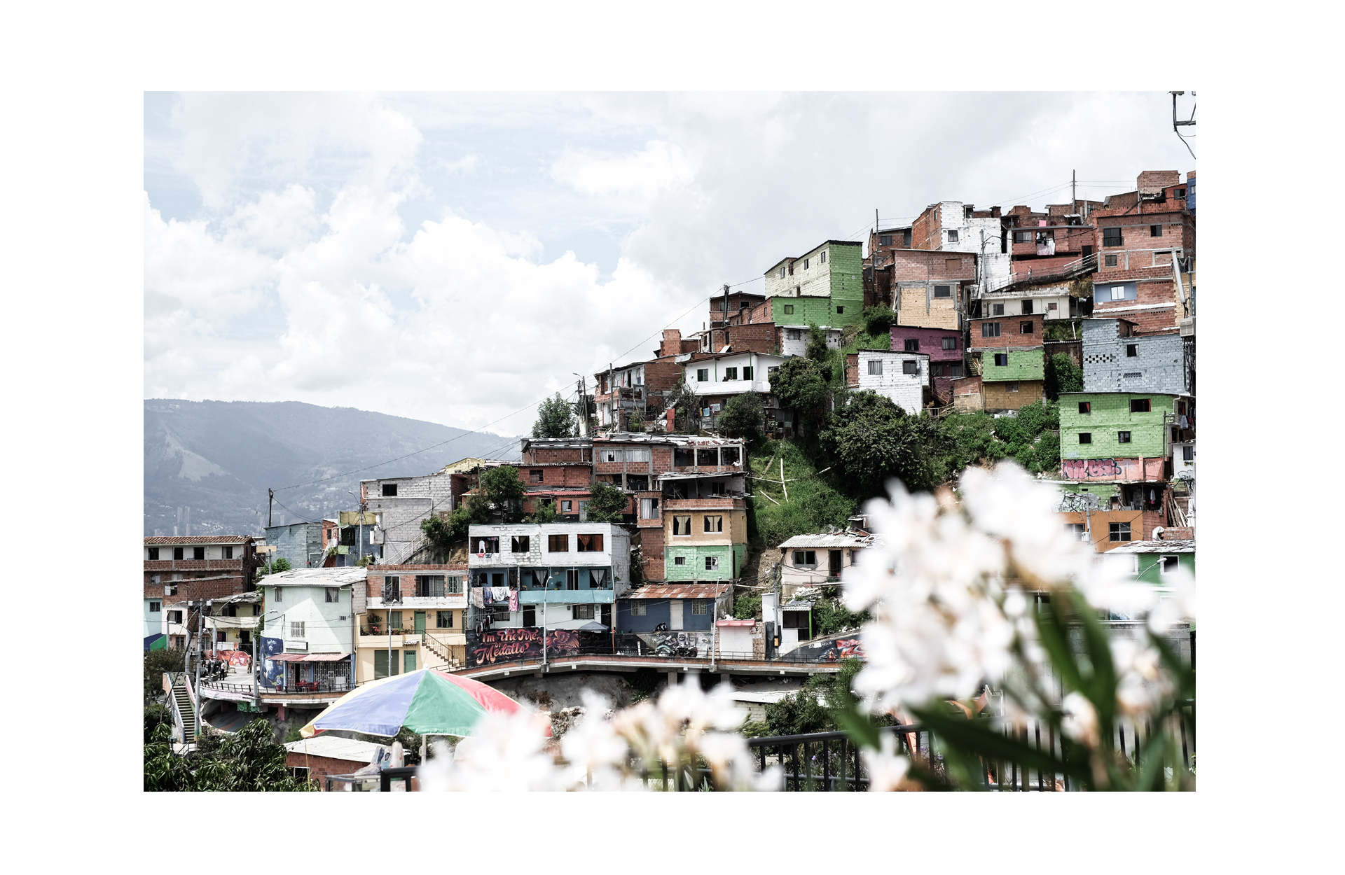 houses in a favela flowers