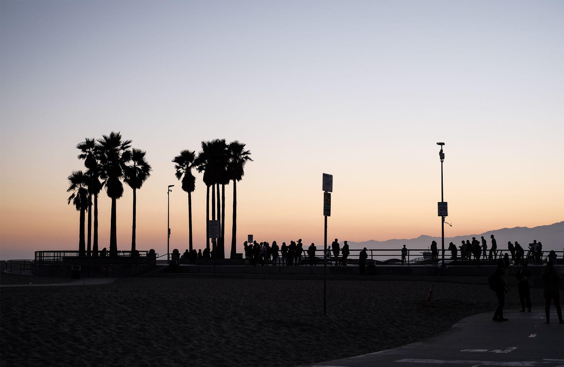 sunset orange palmtrees
