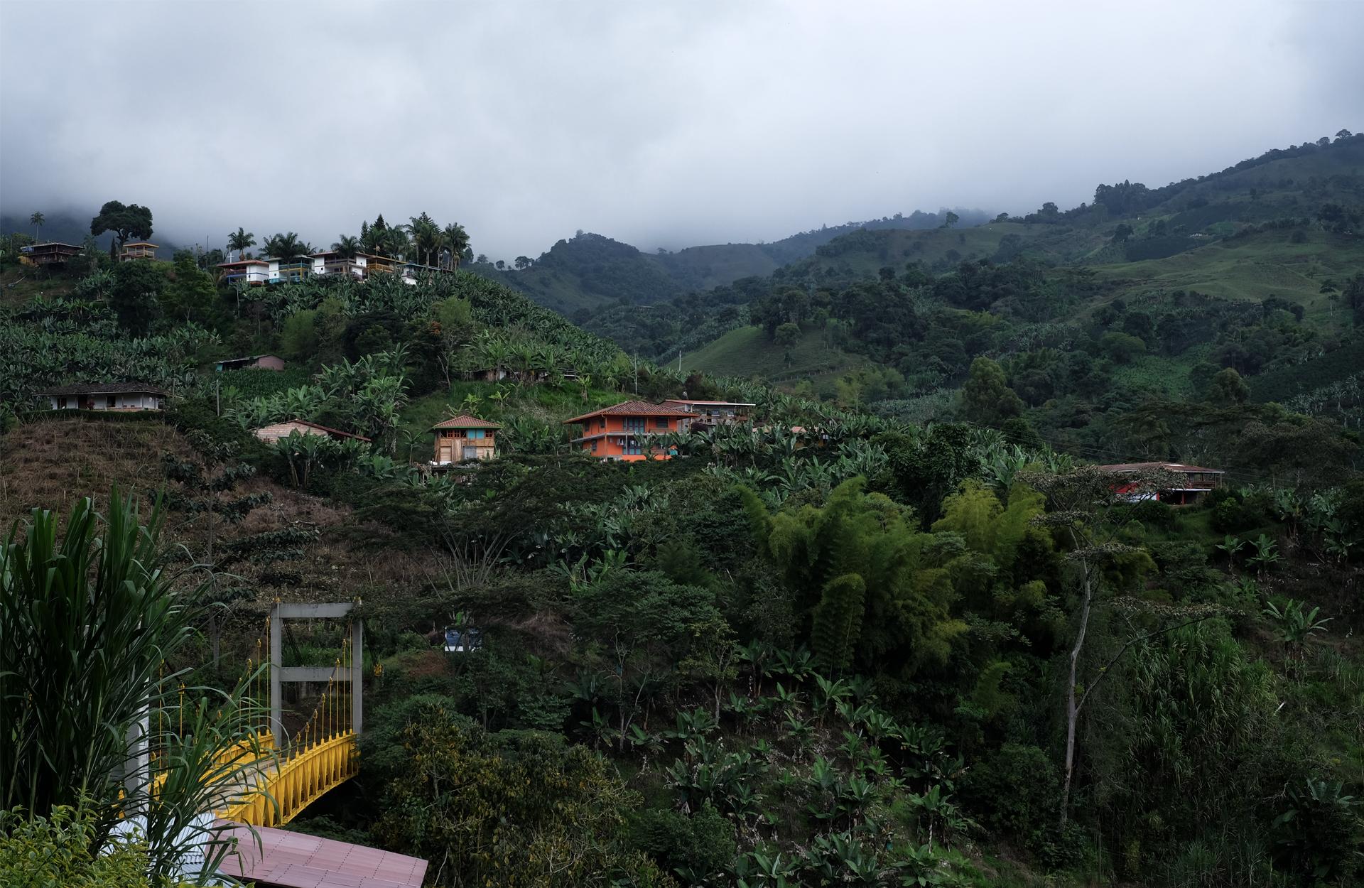 view bridge yellow banana jungle