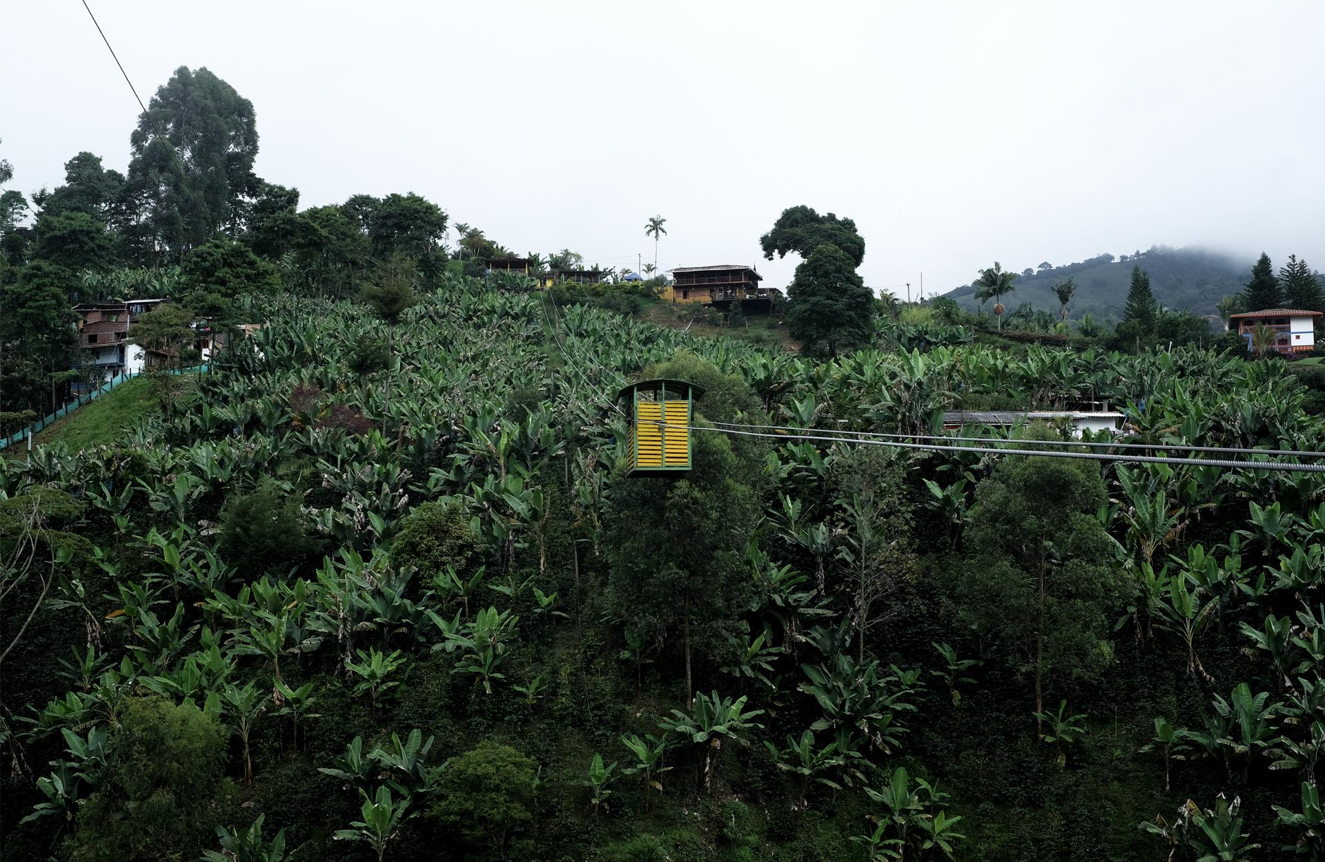teleferico yellow banana tree