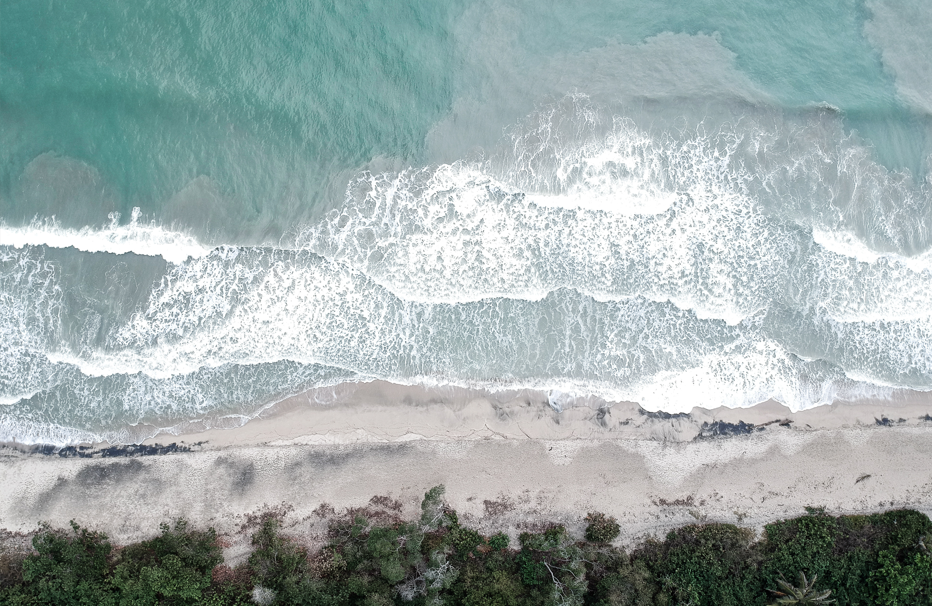 drone view half blue water  and half sand  and palm trees in Palomino