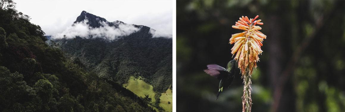 colora colibri flower