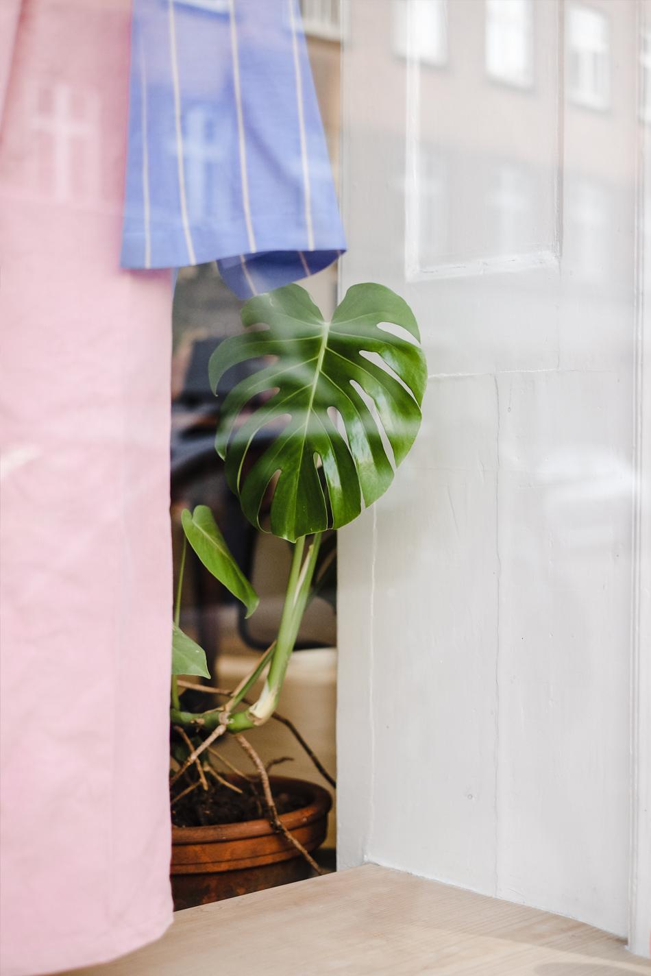 monstera plant inside a shop