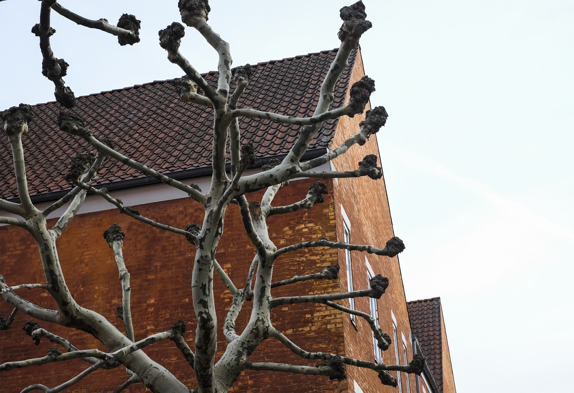 winter tree and yellow wall of building in Copenhagen