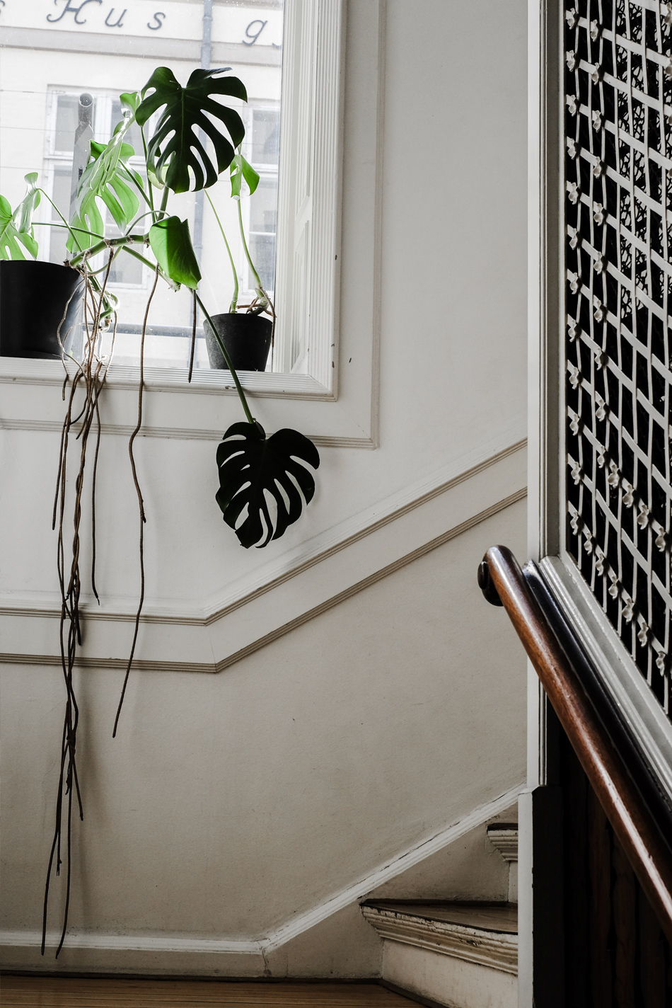 stairs and plant