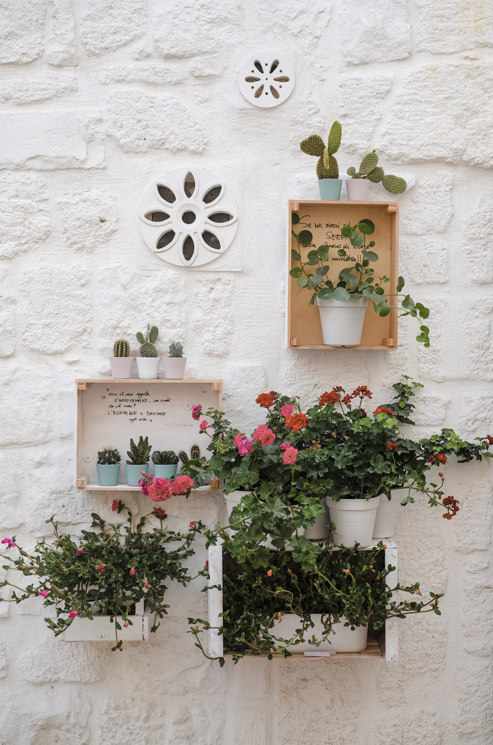 A glimpse of Puglia, decoration with plants on a white wall in Polignano