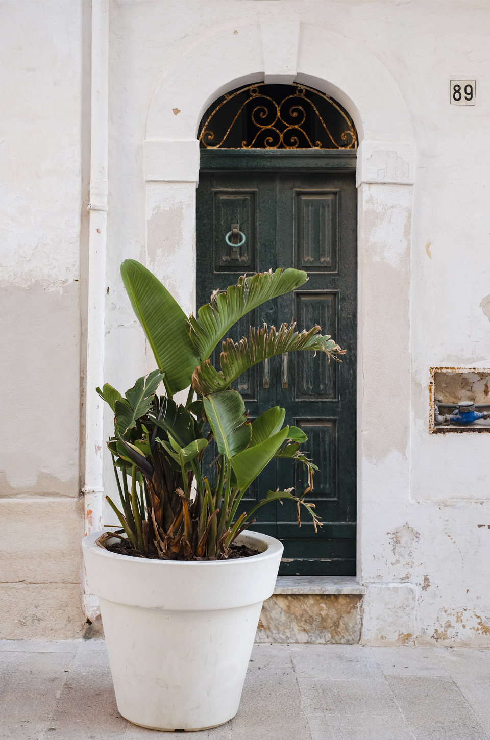 banana plant in a white pot infront of a green door in the center of Polignano