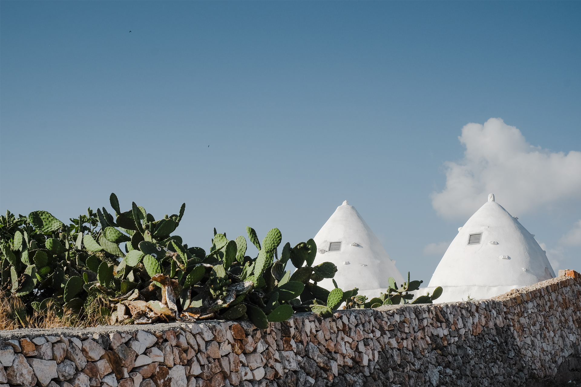 Typical White buildings of Puglia next to a cactus