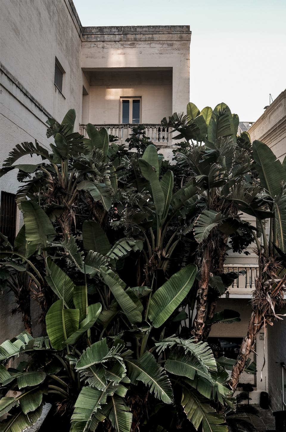 old building behind a banana tree on the streets of Polignano a Mare