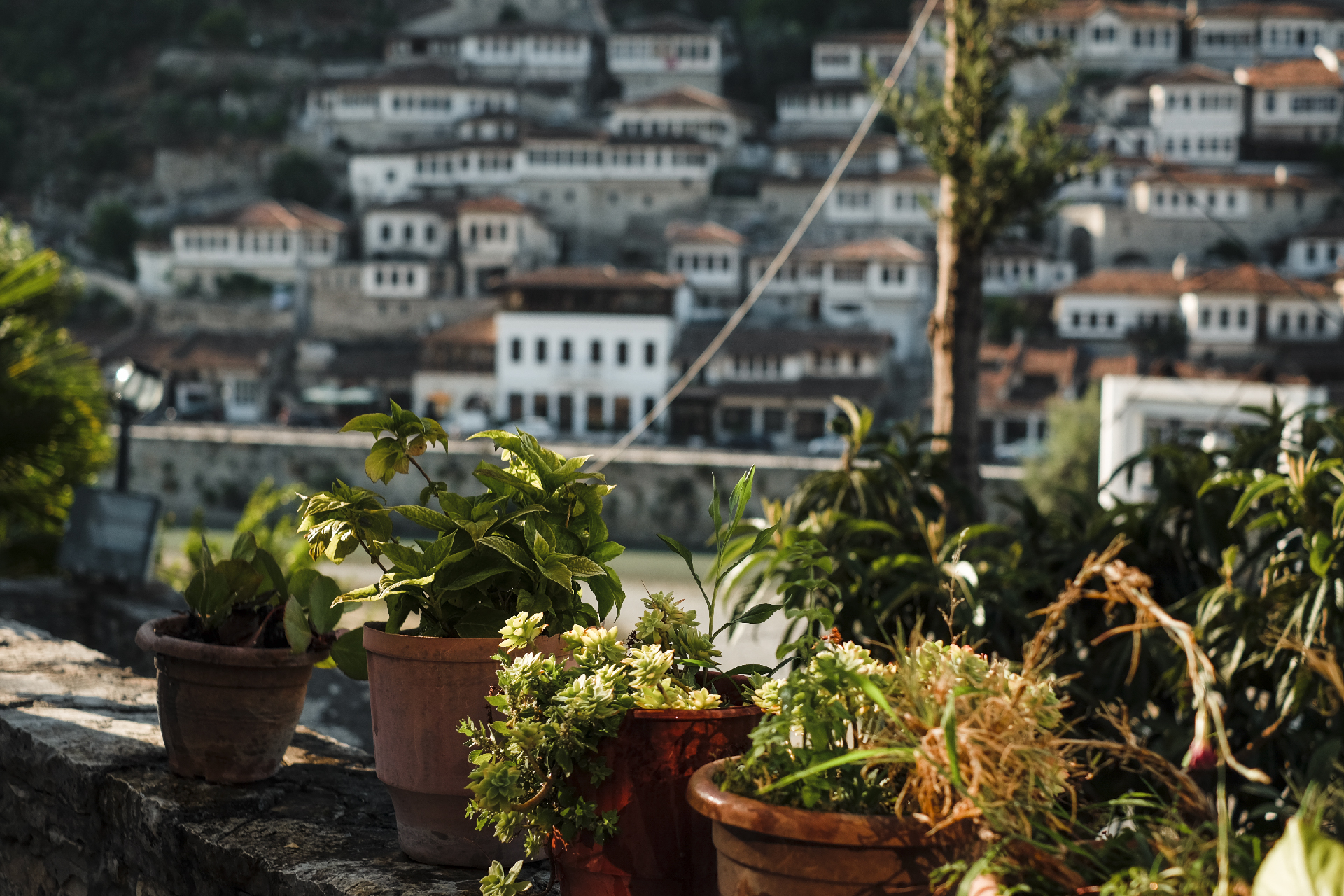 Plants in pots with the thousand windows in the backdrop, the center of Albania