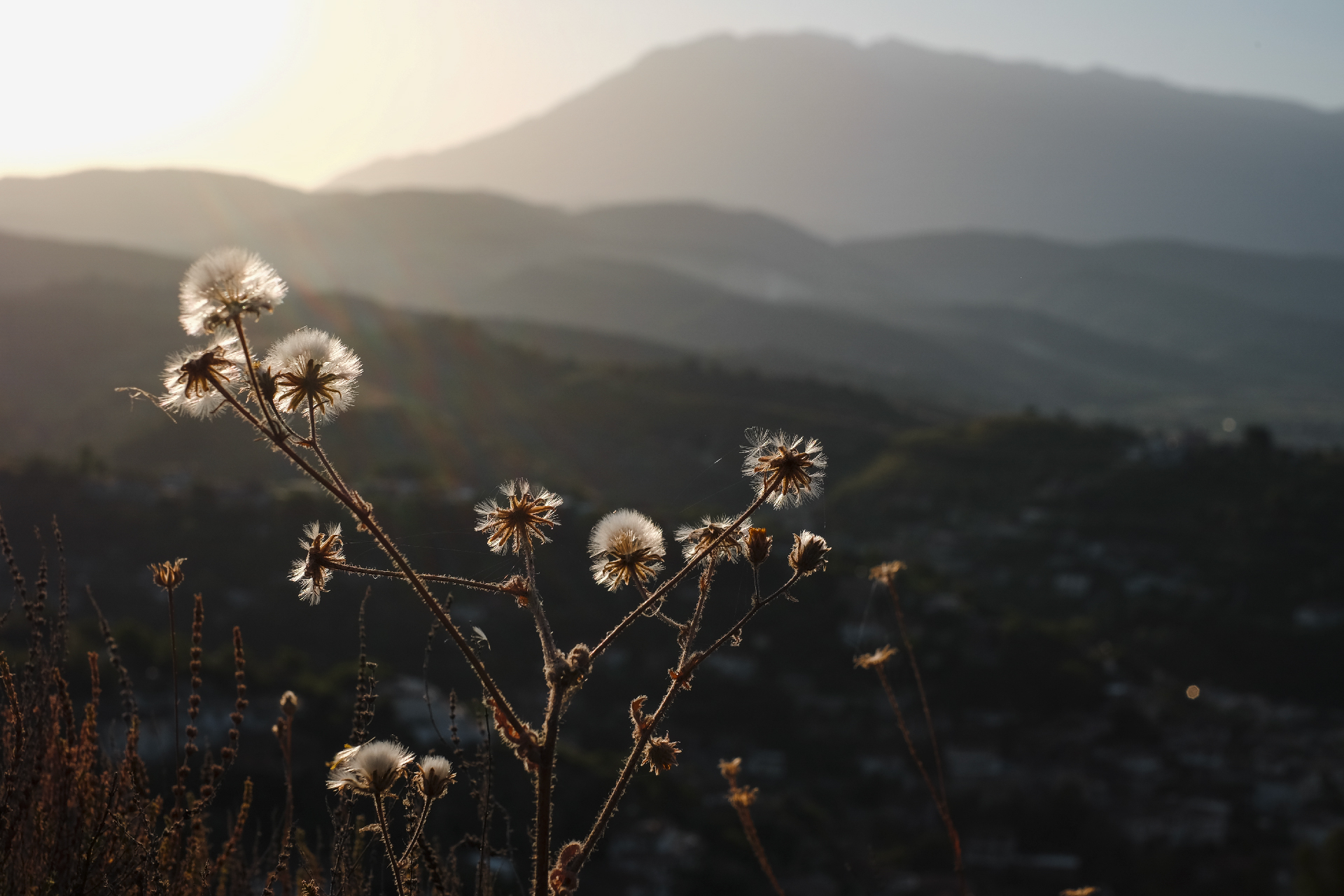 Herbs and flowers at sunrise with mountain backdrop, the center of Albania
