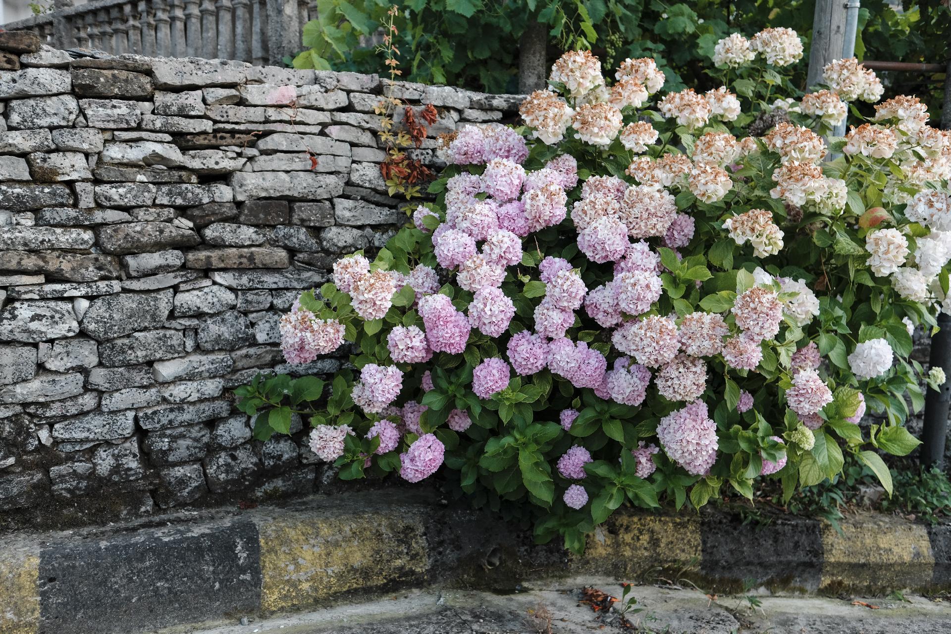 flowers in the streets of Gjirokastër, the center of Albania